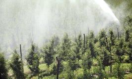 Sistema de irrigación Imágenes de archivo libres de regalías
