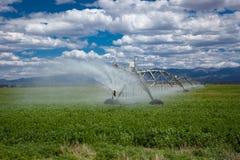 Sistema de irrigación agrícola del pivote de centro Fotografía de archivo