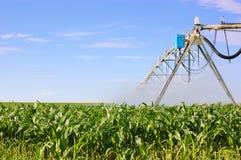 Sistema de irrigación que riega el campo de maíz verde Imagen de archivo libre de regalías