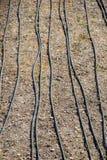 Sistema de irrigación usando las regaderas en un campo cultivado foto de archivo