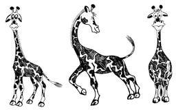Sistema de jirafas del vector Imagen de archivo