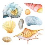 Sistema de la acuarela de conchas marinas y de piedras Imágenes de archivo libres de regalías