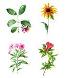 Sistema de la acuarela de las flores Imagenes de archivo