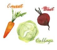 Sistema de la acuarela de las verduras Foto de archivo libre de regalías