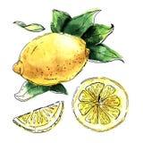 Sistema de la acuarela de limones Segmentos del limón, jugosos Imagenes de archivo
