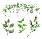 Sistema de la acuarela de plantas verdes stock de ilustración