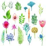 Sistema de la acuarela del vector de flores, de hojas y de plantas Foto de archivo libre de regalías