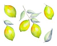 Sistema de la acuarela de limones libre illustration