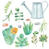Sistema de la acuarela de los cactus, succulents, guijarros, macetas