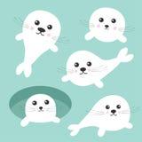 Sistema de la arpa del bebé de cría de foca personaje de dibujos animados lindo del Hielo-agujero Fondo para una tarjeta de la in ilustración del vector