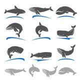 Sistema de la ballena Vector Fotos de archivo libres de regalías