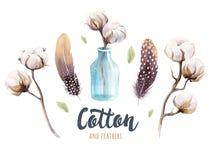 Sistema de la cápsula dibujada mano del algodón del watercolour Acuarela aislada p stock de ilustración