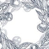 Sistema de la cereza Baya dibujada mano aislada en el fondo blanco Ejemplo grabado fruta del estilo del vector del verano Grande  Fotos de archivo libres de regalías