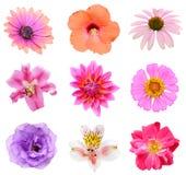 Sistema de la colección de cabezas de flor Imagen de archivo