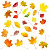 Sistema de la colección de hojas de otoño coloridas hermosas Imagen de archivo