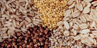 Sistema de la colección de los granos de cereal mijo, avena, maíz, arroz imagen de archivo libre de regalías