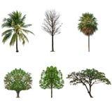 Sistema de la colección del árbol aislado en blanco Imagen de archivo