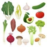 Sistema de la comida de las verduras Ilustración del vector Imagen de archivo libre de regalías