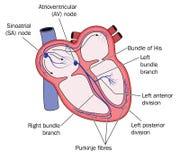 Sistema de la conducción de corazón Fotos de archivo libres de regalías