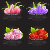 Sistema de la flor colorida en bandera Foto de archivo libre de regalías
