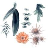 Sistema de la flor de la acuarela Foto de archivo