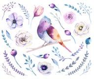 Sistema de la flor del boho de la acuarela Decoración b floral de la primavera o del verano stock de ilustración