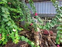 Sistema de la flor del estiércol vegetal Imagen de archivo
