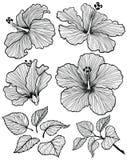 Sistema de la flor del hibisco Imagen de archivo libre de regalías