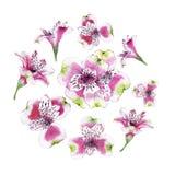 Sistema de la flor dibujada mano del Alstroemeria de la acuarela Fotografía de archivo