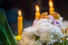 sistema de la flor que ruega para dios Imagenes de archivo