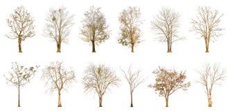 Sistema de la forma del árbol y de la rama de árbol secas en el fondo blanco para aislado Imagen de archivo