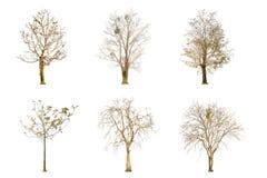 Sistema de la forma del árbol y de la rama de árbol secas en el fondo blanco para aislado Imagen de archivo libre de regalías
