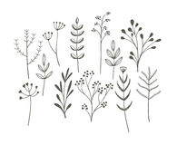 Sistema de la hierba del garabato stock de ilustración