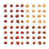 Sistema de la hoja del otoño Fotos de archivo libres de regalías