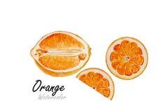 Sistema de la naranja Pintura dibujada mano de la acuarela en el fondo blanco Ilustración del vector Foto de archivo