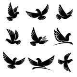 Sistema de la paloma Vector Imagen de archivo libre de regalías