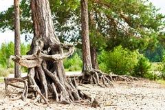 Sistema de la raíz de árboles Imágenes de archivo libres de regalías