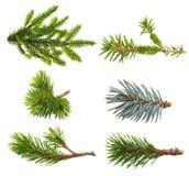 Sistema de la rama de árbol de abeto Fotos de archivo libres de regalías