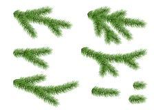 Sistema de la rama spruce stock de ilustración