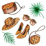 Sistema de la ropa del leopardo libre illustration
