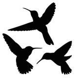 Sistema de la silueta del colibrí Imágenes de archivo libres de regalías