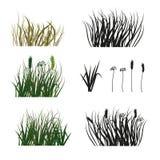 Sistema de la silueta dibujada mano de la hierba aislada en el fondo blanco Fotografía de archivo
