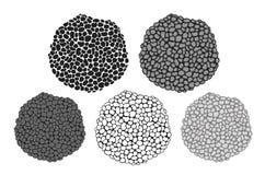 Sistema de la trufa Trufa aislada en el fondo blanco stock de ilustración