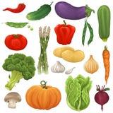 Sistema de la verdura Foto de archivo libre de regalías