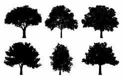 Sistema de las colecciones de la silueta del roble ilustración del vector