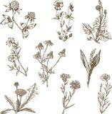 Sistema de las flores salvajes Fotografía de archivo libre de regalías
