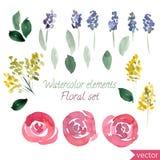 Sistema de las flores y de la hoja de las rosas de la acuarela Vector la colección con las hojas y las flores, dibujo de la mano Foto de archivo libre de regalías