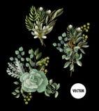 Sistema de las hojas del verdor y del ramo suculento en estilo de la acuarela El eucalipto, la magnolia, el helecho y el otro eje stock de ilustración