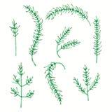 Sistema de las hojas y de la rama de la primavera de la acuarela El abeto deja el ejemplo en diversas formas Ilustración del vect stock de ilustración