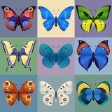 Sistema de las mariposas coloridas para el diseño Foto de archivo